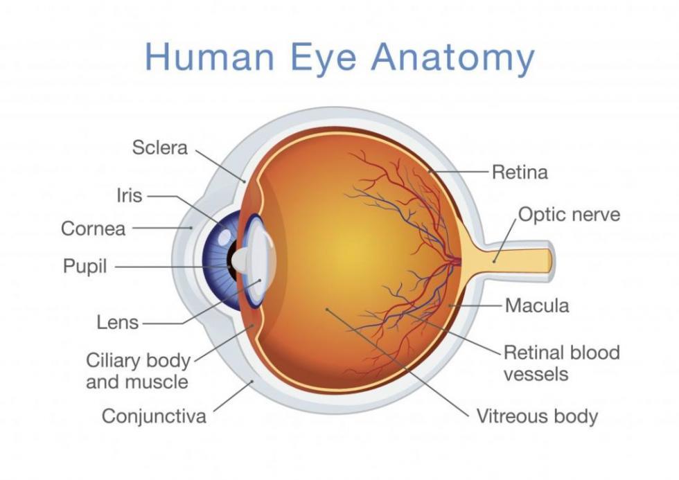 patologie-occhio